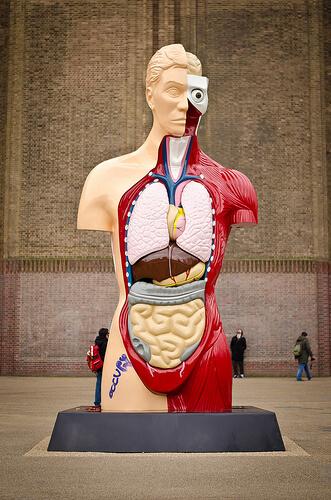 anatomy photo
